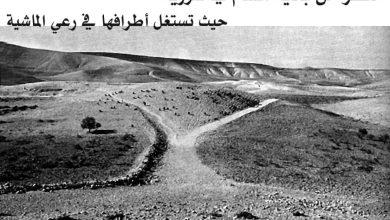 تطور الزراعة في سورية