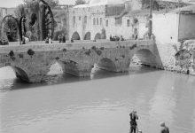 صورة حماة عام 1950