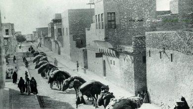 دير الزور - قافلة جمال في منطقة دير العتيق مطلع القرن العشرين