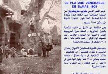 صورة دمشق – كرابيد كريكوريان و كارل فاتسينر و كارل فوتسينر و شجرة الدلب 1908