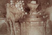 صورة معصرة زيتون في دمشق 1910