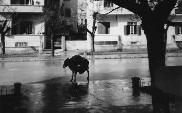 دمشق - شارع فؤاد الأول (29 أيار) في شتاء الخمسينيات