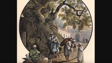فيديو - شجرة الدلب الضخمة في دمشق