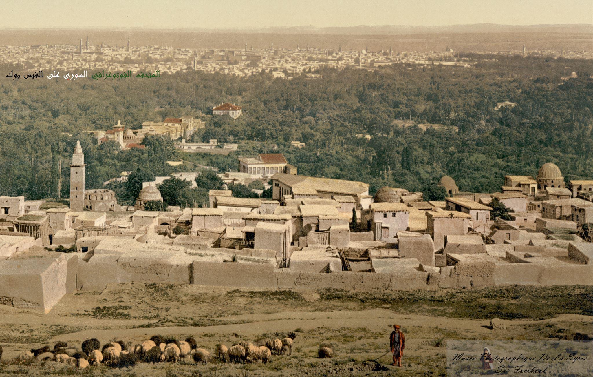 دمشق - راعي أغنام في الصالحية مطلع القرن العشرين