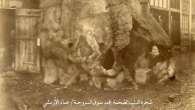 دمشق - شجرة الدلب المقدسة في سوق السروجية (2)