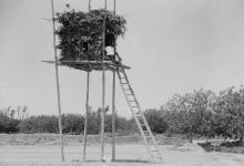 صورة دوما 1920- خيمة ناطور العنب