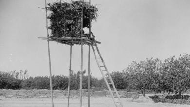 دوما 1920- خيمة ناطور العنب