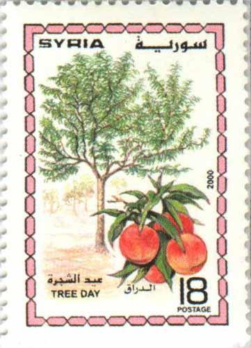 طوابع سورية عام 2000 –  عيد الشجرة