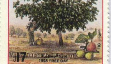 طوابع سورية 1999 – عيد الشجرة