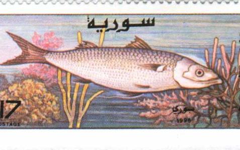 طوابع سورية 1997 – الأسماك