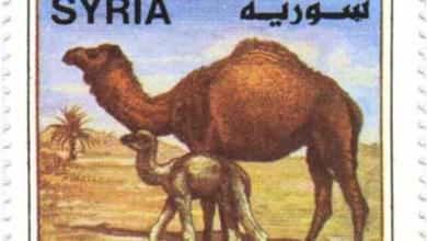 طوابع سورية 1998 – حيوانات - الجمال