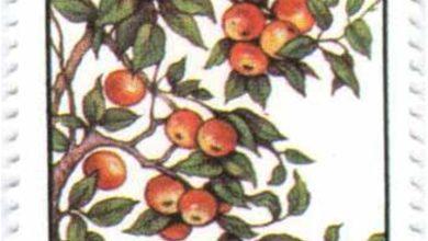 صورة طوابع سورية 1997 – عيد الشجرة