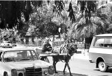 اللاذقية 1988- مارتقلا قرب الحديثة