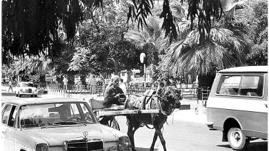 صورة اللاذقية 1988- مارتقلا قرب الحديثة