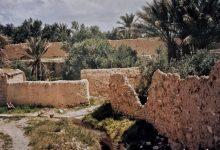 صورة واحة تدمر – نيسان 1997